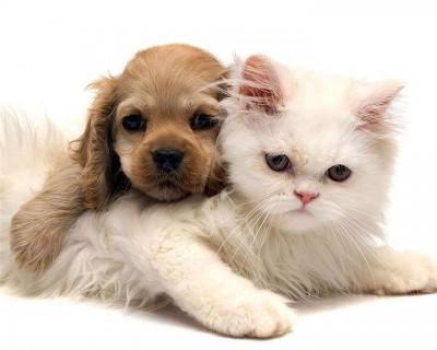 宠物会传染新冠状病毒吗 新冠状病毒的传播途径