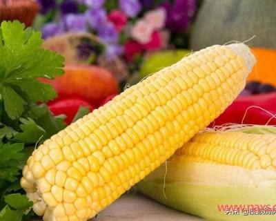 """买玉米时,""""黄色""""和""""白色""""的哪个营养更高?"""