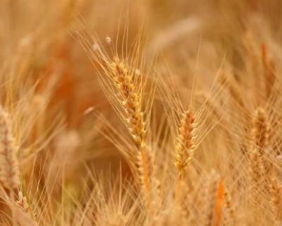 芒种节气吃什么食物,芒种要吃哪些食物养生