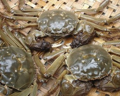 白色大闸蟹隔着壳能看到蟹黄