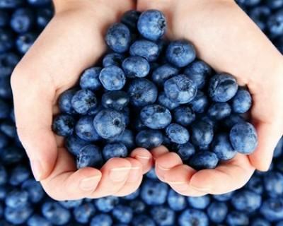 蓝莓的功效与作用,吃蓝莓有禁忌这些人要注意