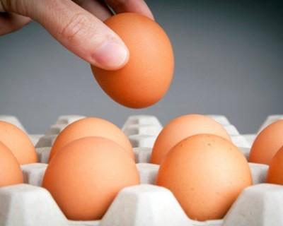 鸡蛋买回去后能干干净净给它洗个澡吗,蚂蚁庄园8月25日答案