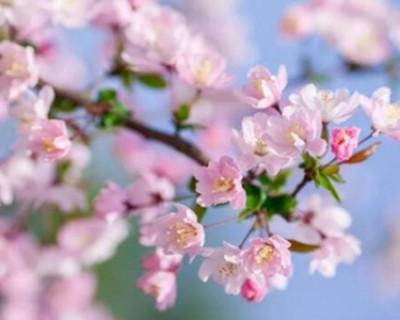描写春天的诗句有哪些 小学生必背经典咏春古诗