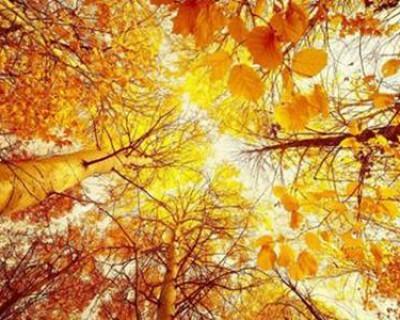 关于秋天的诗句有哪些 古人笔下的秋天太唯美惊艳了