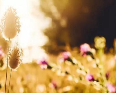 清晨的阳光唯美句子,最美的一句问候语