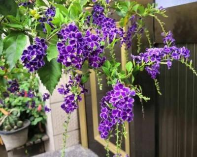 夏天开的花(30种夏天花)