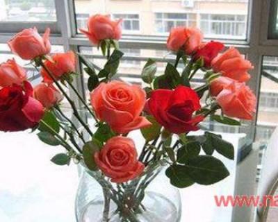 买回来的鲜花怎么养时间长 让鲜花持久盛开的小方法不可不知!